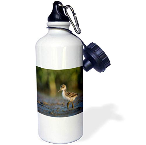 3dRose Danita Delimont - Birds - Black-Necked Stilt Chick forages on a Lakeshore in Eastern Washington. - Flip Straw 21oz Water Bottle (wb_315140_2)