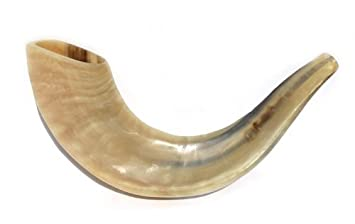 Small Rams Rams Horn Shofar 10 13 Medium From Israel New Jewish
