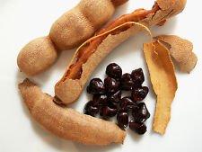 as tamarind fruit - 7