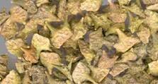 Prodgf 500Pcs A Set Pelargonium Graveolens or 500pcs Tribulus terrestris or 800pcs Miscanthus sinensis - (Color: 500pcs Tribulus terr)