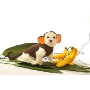 Dog Monkey Costume - Large -
