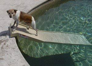 - PetSTEP Swimming Pool Legs Kit
