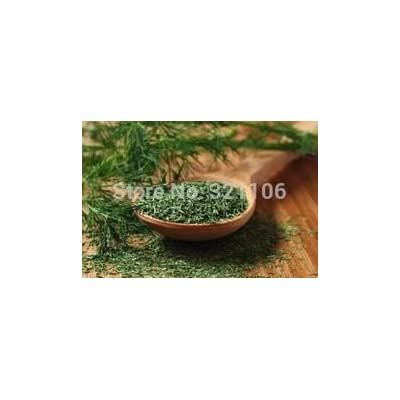 50 dill herb seeds flower seeds kitchen herb seasoning Potted Vegetable Seeds : Garden & Outdoor