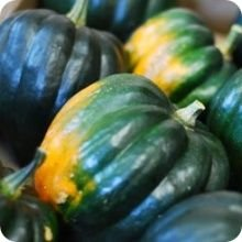 Acorn Table Queen Winter Squash Seeds 360 Seeds Upc 646263362143 + 2 Plant Marker Zucchini Squash
