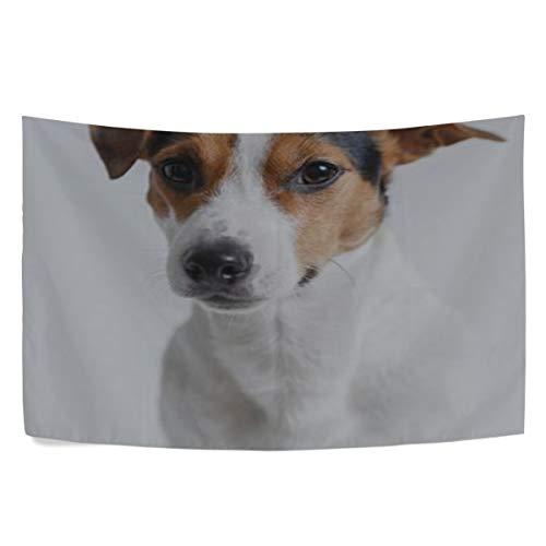 - RH Studio Tapestry Wall Hanging Dog Jack Russell Terrier Puppy Pet Dorm Livingroom Bedroom Bedspread Sofa Cove Living Kids Girls Boys Room Dorm Deco (60x40inch)