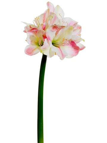 32-Amaryllis-Spray-Pink-White-pack-of-4