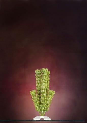 JW Pet Company Natures Design Plant Hornwort Medium - Jw Pet Plant