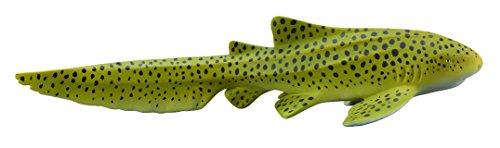 zebra shark - 6