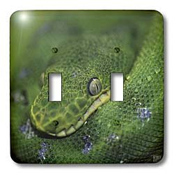 3dRose lsp_9932_2 Emerald Tree Boa Double Toggle Switch