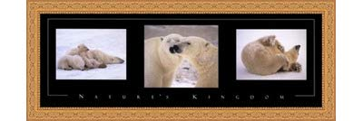 Framed Nature's Kingdom-Polar Bears- 36x12 Inches - Art Print (Ornate Gold Frame)