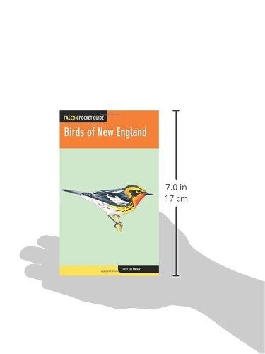 Birds of New England: A Falcon Pocket Guide
