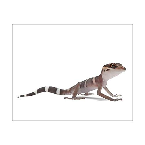 Media Storehouse 10x8 Print of Chinese cave Gecko (Goniurosaurus luii) (Cave Art Gecko)