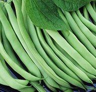 Kentucky Wonder Bush Beans, 30+ Premium Heirloom Seeds, ON Sale!, (Isla's Garden Seeds), 99% Purity, 85% Germination, Non GMO Organic Survival Seeds, Highest Quality (Beans Kentucky Bush Wonder)