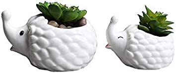 2 PCS Set Cute Animal Hedgehog Shaped Ceramic Cartoon Home Garden Decoration Succulent Cactus Vase Flower Pot