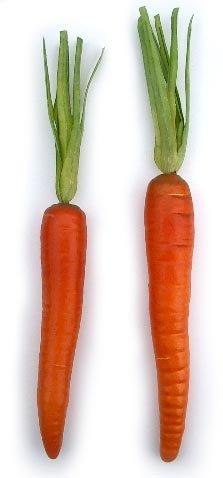 Artificial-Carrot-1-dozen-per-bag