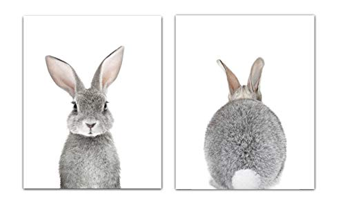 Baby Nursery Wall Decor Prints- Set of 2 UNFRAMED Wall Print 8x10 Baby Bunny Front and Back Photographic Print