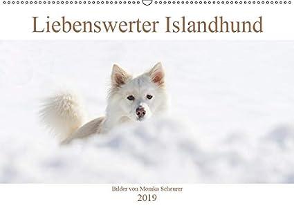 Liebenswerter Islandhund (Wandkalender 2019 DIN A2 quer): Mein Islandhund Djarfur ist ein liebenswerter Clown mit einem unwiderstehlichen Charme und ... (Monatskalender, 14 Seiten ) (CALVENDO Tiere)