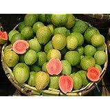 Erdbeer-Guave Samen (5)