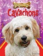 Cavachons (Designer Dogs (Designer Dog Series)