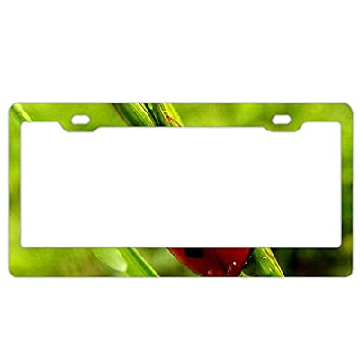 "YEX Abstract Beetle ladybug13 License Plate Frame Car Licence Plate Covers Auto Tag Holder 6"" x 12"""