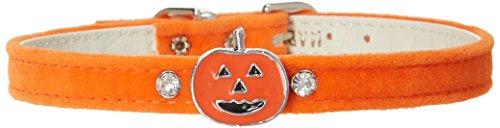 Mirage Pet Products Pumpkin Charm Collar for Dogs, 14-Inch, Orange Velvet ()