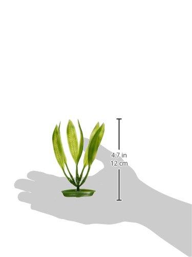 Image of Marina Aquascaper Amazon Sword Plant, 5-Inch