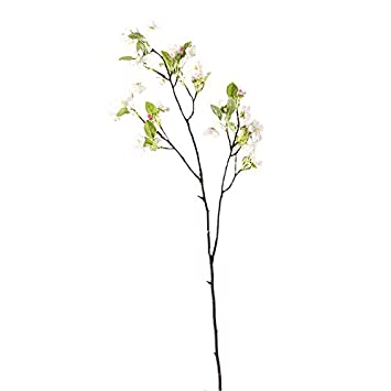 Kirschblüte aus SinglesNeue kostenlose Dating-Website in usa 2012