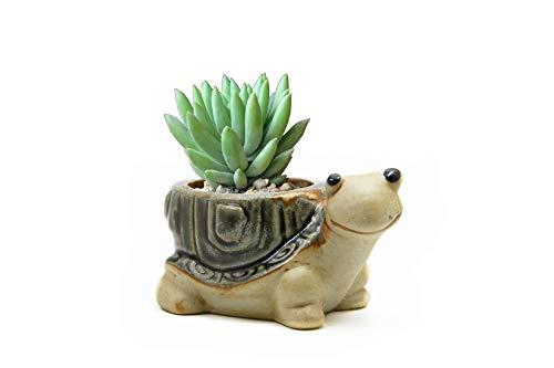 Goldblue Ceramic Home/Garden Flower Planter Pot - Outside Cute Turtle Design