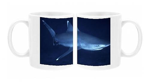 Photo Mug of Female Silvertip Reef Shark - these beautiful sharks grow to 3 plus (Silvertip Reef Shark)