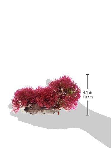 Amazon.com : eDealMax pecera de bola de la Flor Artificial de la hierba, DE 2, 8 pulgadas de altura, Rojo : Pet Supplies