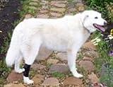 Dog Hock Holder- Large, My Pet Supplies