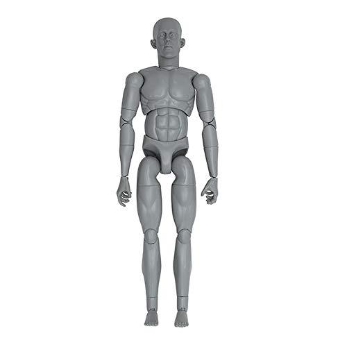 Art S. Buck Anatomical Manikin - Male