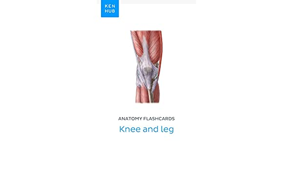 Anatomy flashcards knee and leg learn all bones ligaments and anatomy flashcards knee and leg learn all bones ligaments and muscles on the go kenhub flashcards book 30 kindle edition by kenhub ccuart Choice Image