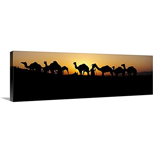 """GREATBIGCANVAS Gallery-Wrapped Canvas Entitled Silhouette of Camels in a Desert, Pushkar Camel Fair, Pushkar, Rajasthan, India by 60""""x20"""""""