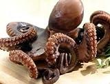 Octopus - Octopus 3-4 lb