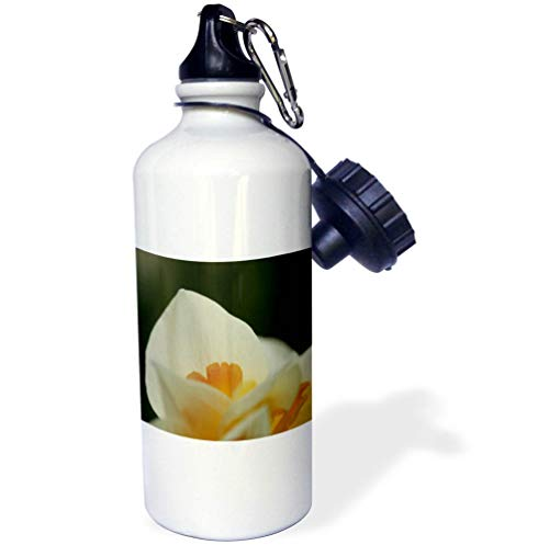 3dRose Stamp City - Flowers - Macro Photo of a White Daffodil Petal During The First Sign of Spring. - 21 oz Sports Water Bottle (wb_307960_1)