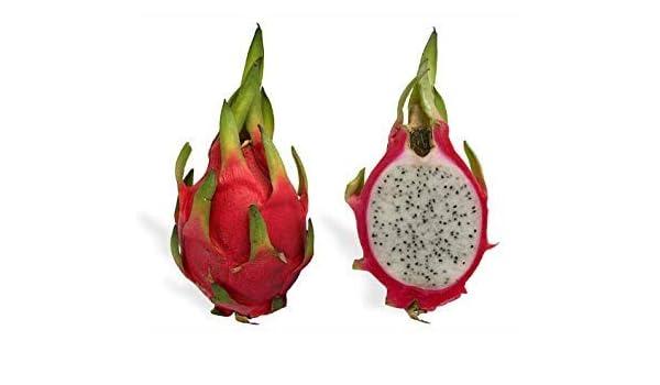 Shoppy Star: 20 Fruta blanca del dragón (Pitaya/Pitahaya ...