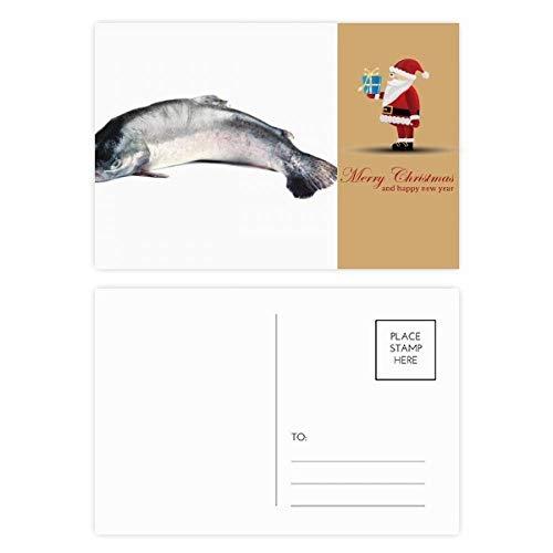 Ocean Fish Alive Activity Curly Santa Claus Postcard Set Thanks Card Mailing 20pcs