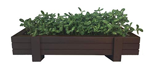(Organic Microgreens Growing Kit with Beautiful Wooden Countertop Planter, Wonder Soil, Organic Microgreen Seeds, Spray Bottle & Easy to Follow Instructions. Harvest Ready in 10 Days.)