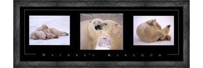 Poster Palooza Framed Nature's Kingdom-Polar Bears- 36x12 Inches - Art Print (Black Barnwood Frame)