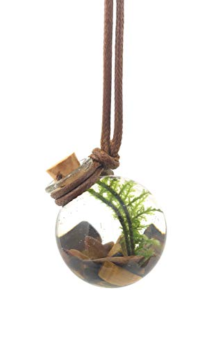 Living, miniature aquarium necklace - Terrarium Pendant | Live Plant Jewelry - Tiger's eye chatoyant gemstone | Orbling Tiger Eye ()