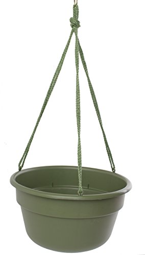 Bloem DCHB1242-12 12-Pack Dura Cotta Hanging Basket/Planter, 12-Inch, Living Green by Bloem
