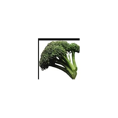 1000 EARLY FALL RAPINI BROCCOLI (Broccoli Raab / Broccoli Rabe / Brocoletti / Cima di Rapa) Brassica Ruvo Vegetable Seeds : Vegetable Plants : Garden & Outdoor