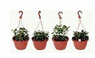 Dhavesai Hanging Pot /Planters, Brown Colour (4 Qty)-Srisai Naturals (B01J081D6M) Amazon Price History, Amazon Price Tracker