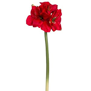 "29"" Amaryllis Spray Red (Pack of 6) 31"