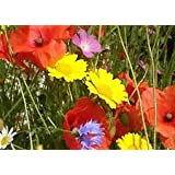 Cornfield annual standard native UK wildflower MeadowMania seed mix 100 grams 5 species includes Poppy & Cornflower