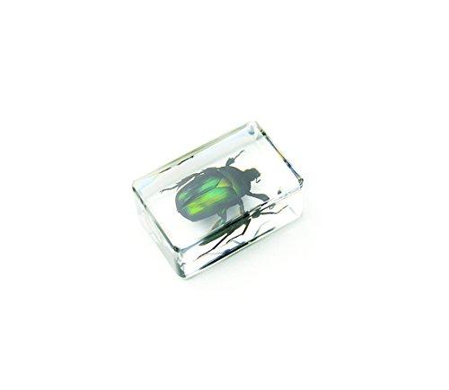 Unicorn Green Rose Chafer Beetle Specimen In Lucite 1.75 (Specimen Shell)