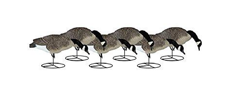 Dakota Decoy Signature Series Flocked Goose Decoys 6 Pack, Feeder (Series Outdoor Dakota)