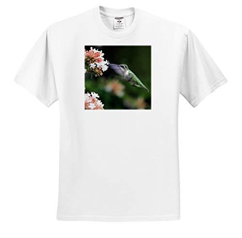 Price comparison product image 3dRose Stamp City - Birds - Photo of Female Ruby-Throated Hummingbird Enjoying Some Abelia Nectar. - T-Shirts - Youth T-Shirt Large(14-16) (ts_291292_14)