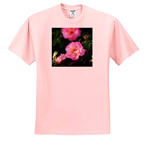 Alexis Photography - Flowers Roses - Beautiful Pink Rose Flower on a Bush. Summertime in The Green Garden - T-Shirts - Adult Light-Pink-T-Shirt 5XL ()